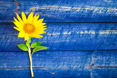 Yellow sunflower painted fence Royalty Free Stock Photo