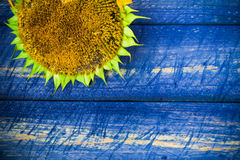 Yellow sunflower painted fence Stock Images