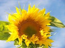 Yellow  Royalty Free Stock Image