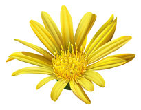 A yellow sunflower Stock Images