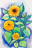 Yellow sunflowers Stock Image