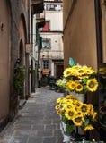 Alleyway in Cortona Italy. Yellow sunflowers in an alleyway in Cortona Italy. Tuscany. European charm Stock Photos