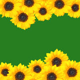 Yellow sunflowers border. With empty green space in center royalty free stock photo
