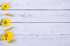 Yellow sunflowers and ears of wheat on a white wooden table, fre Stock Image