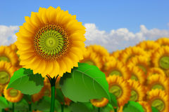 Yellow sunflowers Royalty Free Stock Photo