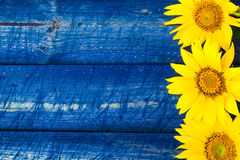Yellow sunflowers painted fence Stock Images