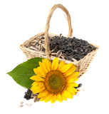 Yellow sunflowers and sunflower seeds. Stock Image