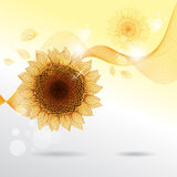 Yellow sunflowers. Vector flower element for Royalty Free Stock Images