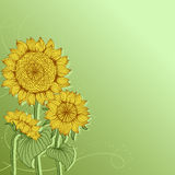 Yellow sunflowers. Vector flower element for Stock Photo