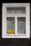 Yellow sunflowers in a window royalty free stock image