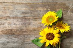Yellow sunflowers on wooden background,. Top view royalty free stock photo