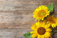 Yellow sunflowers on wooden background Stock Photo