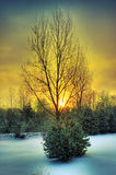 Yellow sunrise. Picture of a surnrise behind a tree with a ground covered with snow Royalty Free Stock Images