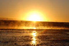 Yellow Sunrise Over Foggy Bosque del Apache Nature Preserve Royalty Free Stock Images