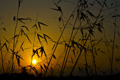 Yellow sunrise silhouette Stock Photo