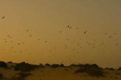 Yellow sunset with birds in a beach Royalty Free Stock Photography