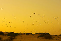 Yellow sunset with birds in a beach Royalty Free Stock Image