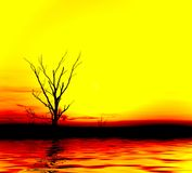 Yellow sunset. Lonely tree royalty free stock photos