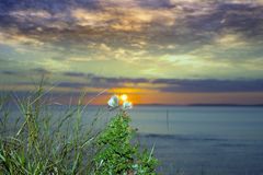 Yellow sunset over loop head with thistles Royalty Free Stock Photography