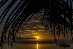 Yellow Sunset with Palm Leaf-Philippines Stock Image
