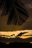 Yellow Sunset with Palm Leaf-Philippines Royalty Free Stock Image