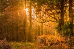 Yellow Sunset Rays Passing Through the Trees stock photos
