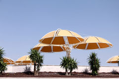 Yellow sunshades Royalty Free Stock Photos