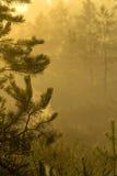 Yellow Swamp Stock Photography
