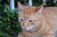 Yellow sweet cat Stock Photos