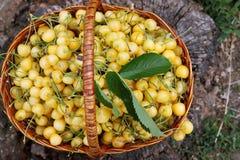 Yellow sweet cherries, top view Royalty Free Stock Photo
