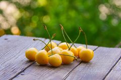 Yellow sweet cherry Royalty Free Stock Image