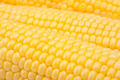 Yellow sweet corn Royalty Free Stock Photos