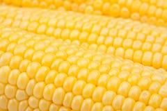 Yellow sweet corn Royalty Free Stock Photos