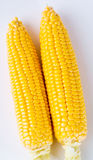 Yellow sweet corn on the background Royalty Free Stock Image