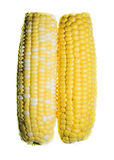 Yellow sweet corn Stock Images