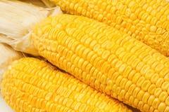 Yellow sweet corn cob Stock Images