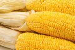 Yellow sweet corn cob Royalty Free Stock Photos