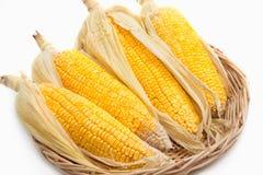Yellow sweet corn cob Royalty Free Stock Photo