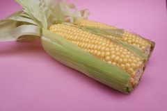 Yellow Sweet Corn on a Pale Pink Background. Two fresh juicy yellow sweet corn cobs on a pale pink background stock images