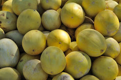 Yellow sweet melons Stock Image