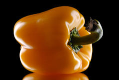 Yellow sweet pepper on a black background Royalty Free Stock Photo