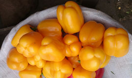 Yellow sweet pepper Royalty Free Stock Photography