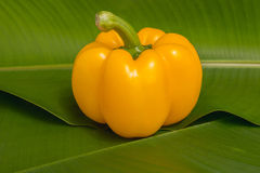 Yellow sweet peppers Royalty Free Stock Image