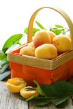 Yellow sweet ripe apricots (peaches) Royalty Free Stock Photo
