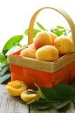 Yellow sweet ripe apricots (peaches) Royalty Free Stock Photo