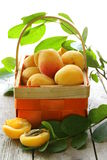 Yellow sweet ripe apricots (peaches) Stock Photography