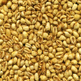 Yellow sweet wheat grain Royalty Free Stock Image