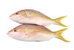Yellow Tail Snappers Stock Photos