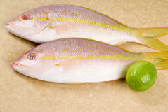 Yellow Tail Snappers and a Lime Stock Image
