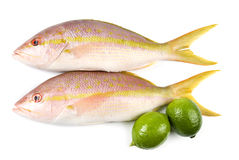 Yellow Tail Snappers and Limes Stock Photography